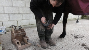 Regular hoof care is essential in the battle against laminitis