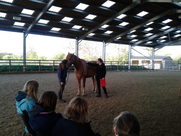 Lorna and equine assistant Callum demonstrate the horse's muscles