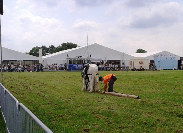Logging demonstration in the Shire horse ring