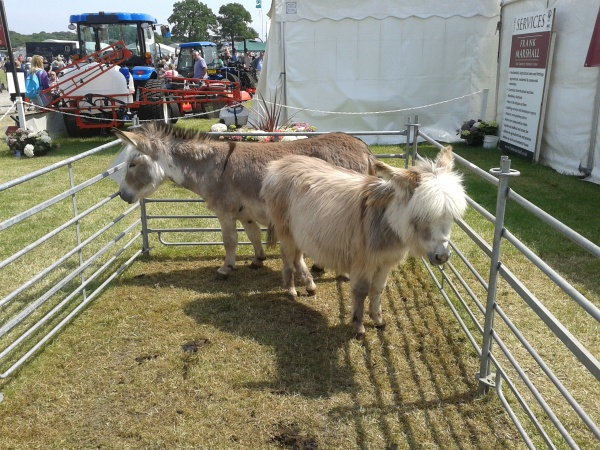 Donkeys at the Frank Marshall stand